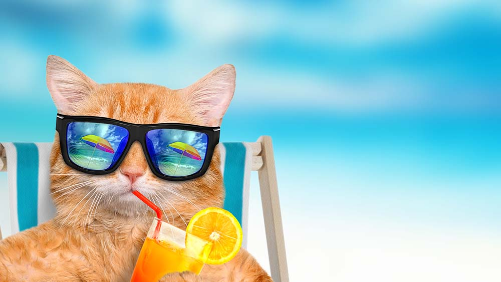 cat needs air conditioning in summer as cat is wearing glasses and sipping juice