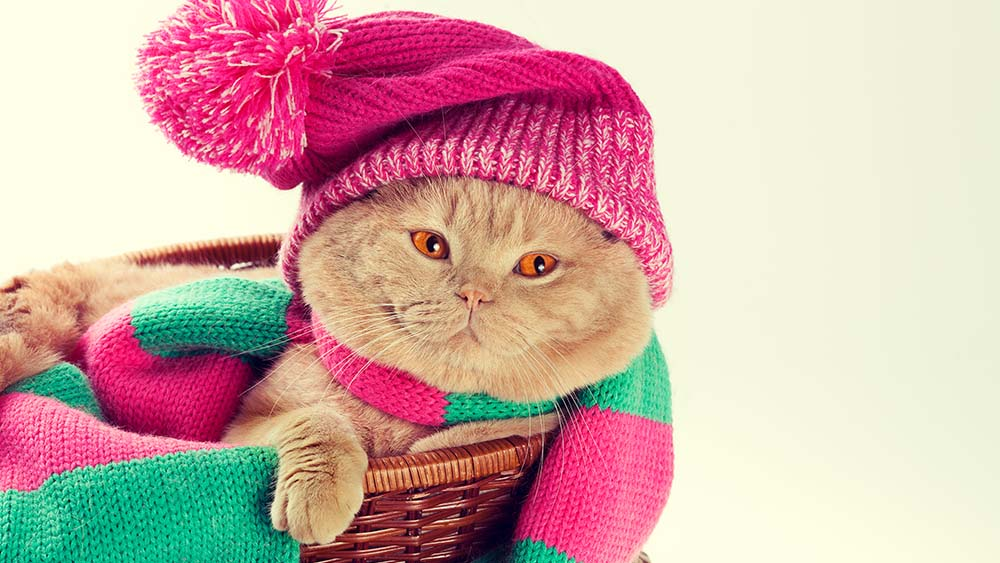 ideal temperature for Cat in winters with cat in a hat