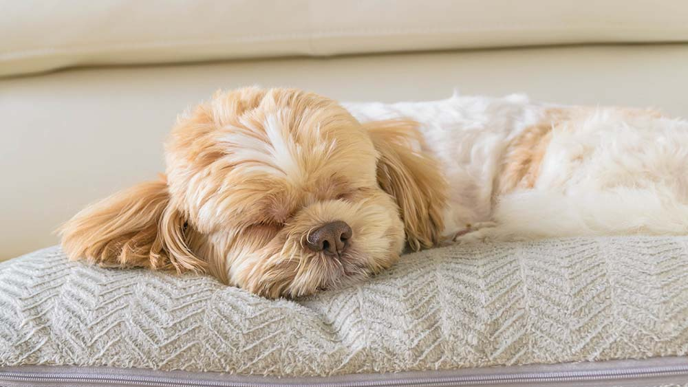 ideal temperature for Dogs in winter for pet comfort