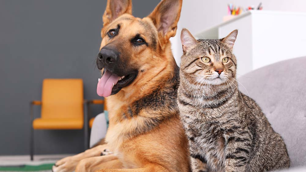 ideal Temperature for dogs and cats