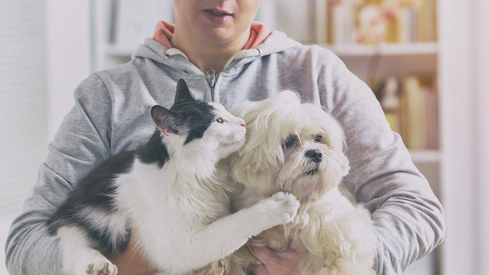Pet comfort tips for pet owners