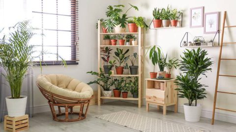 Houseplants decorated in a plant room