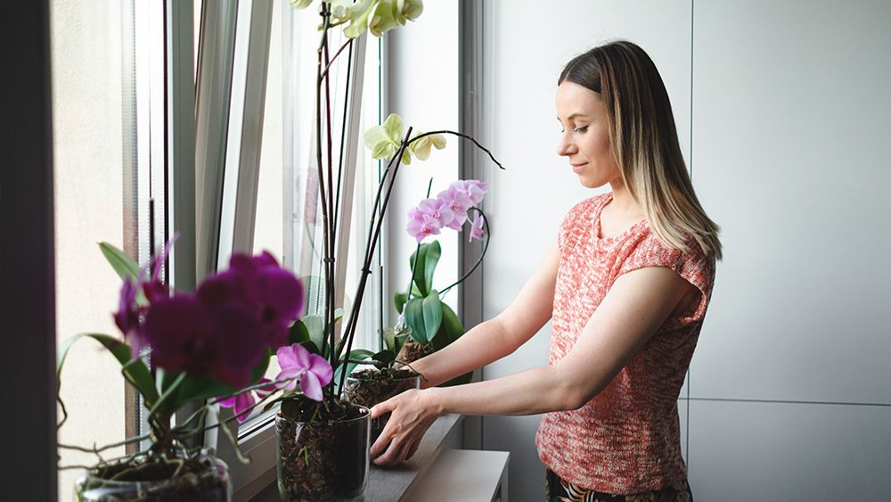 A girl decorating window sill with orchid plants