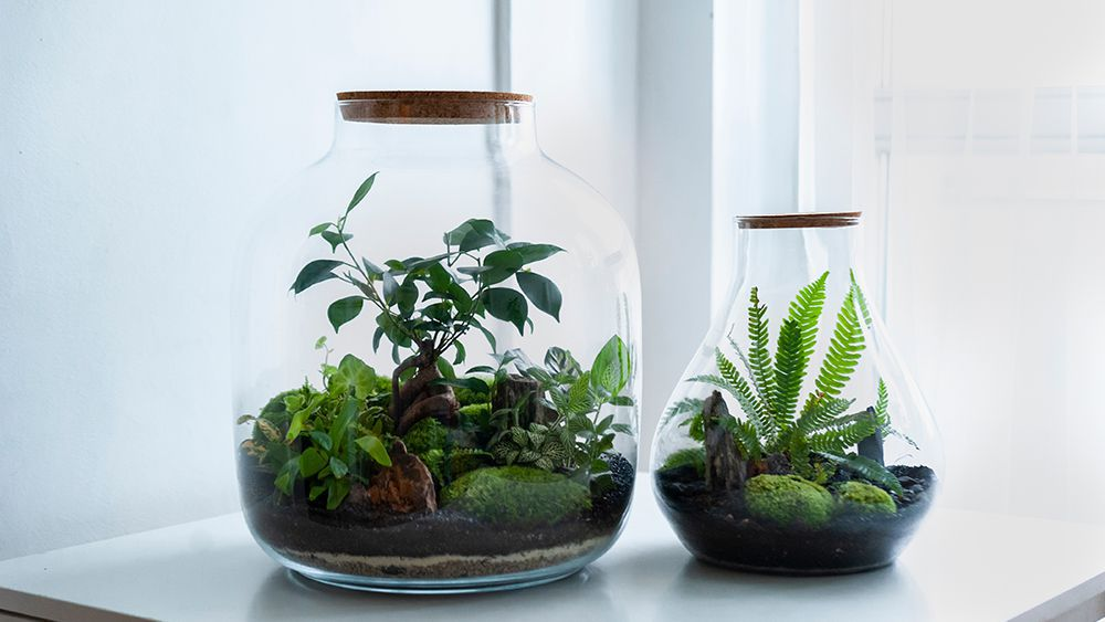 Closed terrarium - Create one to increase humidity for plants