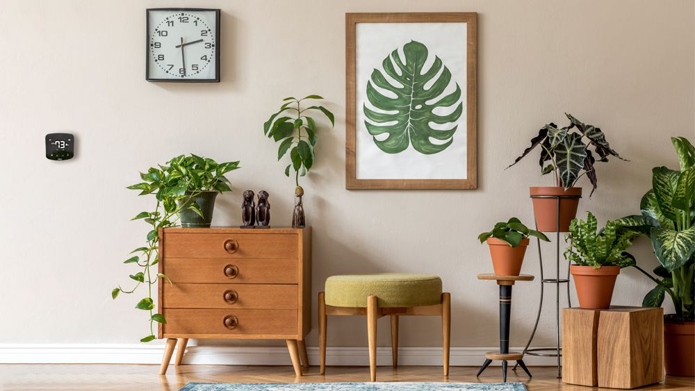 Indoor plants nicely decorated in a living room. Cielo Breez Plus can be spotted on the wall managing the ideal temperature range.